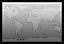 World greyscale